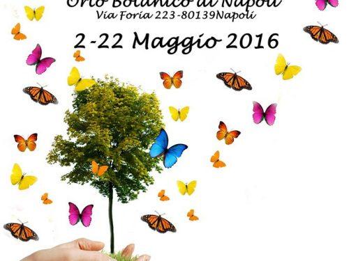 L'Universo delle farfalle – Mostra di Farfalle viventi all'Orto Botanico di Napoli